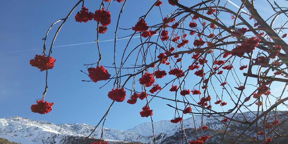 http://www.treelogy.it/wp-content/uploads/2017/05/albero-fiorito-montagna-1000x500-web.jpg