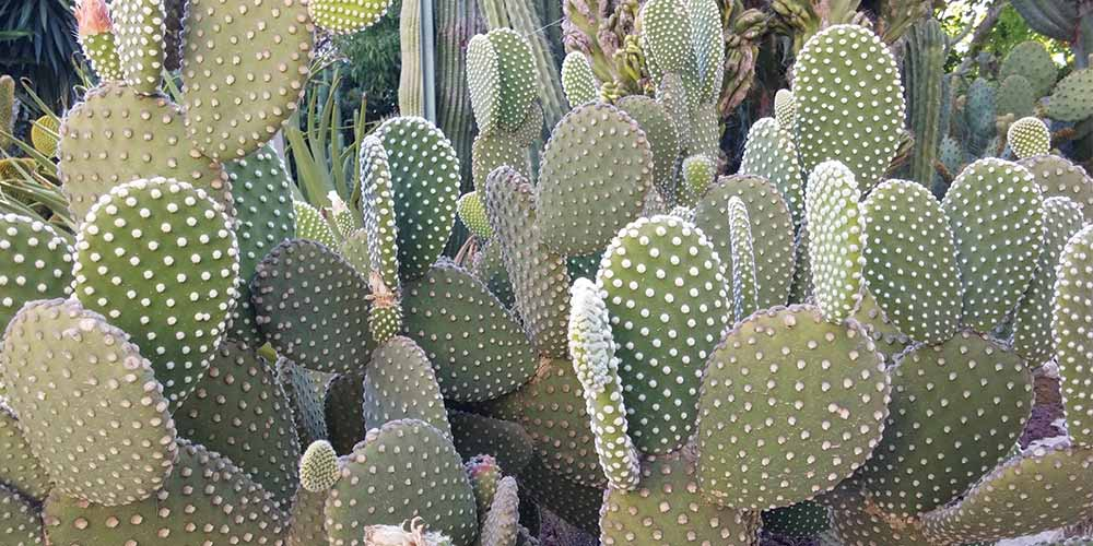 http://www.treelogy.it/wp-content/uploads/2017/05/cactus-1000x500-web.jpg