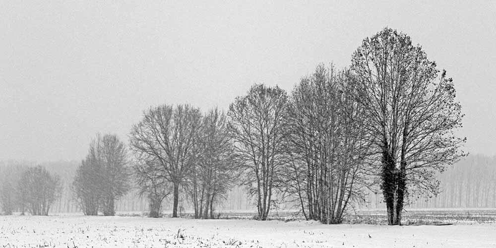 Proteggere il vostro verde dall'inverno
